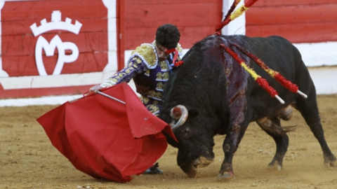 Over 40 bulls are slaughtered every year in Merida City